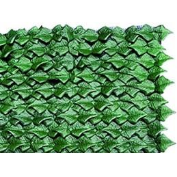Siepe Sempreverde Edera